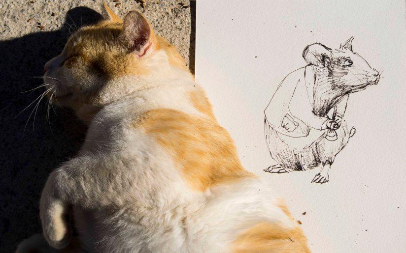 raton-miedoblanconegroygato